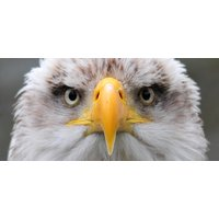 Click to view details and reviews for All Day Eagle Handling Experience In Cheshire.