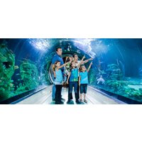 Thames Cruise + London Aquarium Experience for Two - Thames Gifts