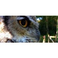 Full Day Falconry Experience in Kent - Falconry Gifts