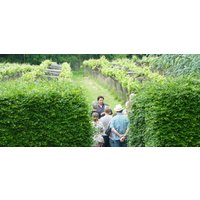Oxfordshire Winery Tour And Wine Tasting For Two - Alcohol Gifts