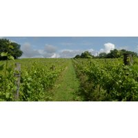 Deluxe Wine Tasting Tour for Two in East Sussex - Alcohol Gifts