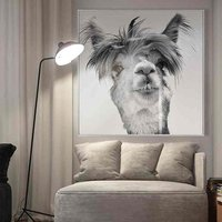 Product photograph showing Cursa Llama Picture Glass Wall Art