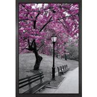 Central Park Blossom Framed Maxi Poster