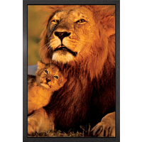 Lion And Cub Framed Maxi Poster