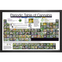 Periodic Table Of Cannabis Framed Maxi Poster - Cannabis Gifts