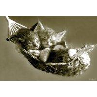 Kittens in Hammock Maxi Poster - Kittens Gifts