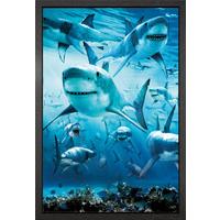 Shark Infested Framed Maxi Poster - Shark Gifts