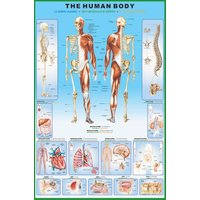 The Human Body Maxi Poster - Gbposters Gifts