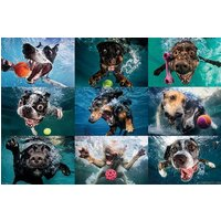 Underwater Dogs Maxi Poster - Gbposters Gifts