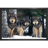 Wolves Framed Maxi Poster - Wolves Gifts