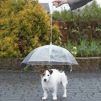Click to view product details and reviews for Dog Umbrella.