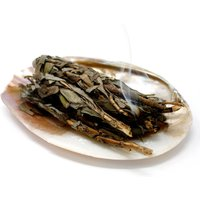 Click to view product details and reviews for Sea Shell Smudge Stick Dish.