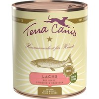 24 x 800 g | Terra Canis | Lachs mit Hirse, Pfirsich & Kräutern Classic | Nassfutter | Hund