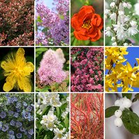 Complete Winter Hardy Shrub Collection (12 Varieties)