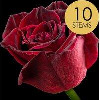 10 Black Baccara Roses