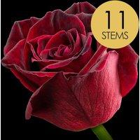 11 Black Baccara Roses