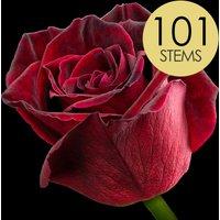 101 Black Baccara Roses