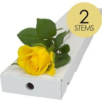 2 Yellow Roses