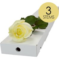 3 White Roses