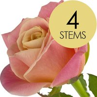 4 Peach Roses