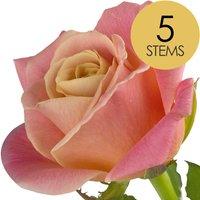 5 Peach Roses
