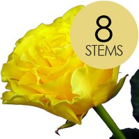 8 Yellow Roses