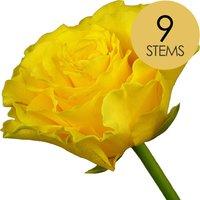9 Yellow Roses