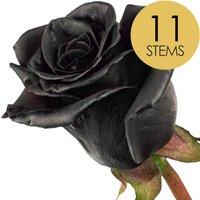 11 Black (Dyed) Roses