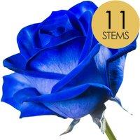 11 Blue Roses