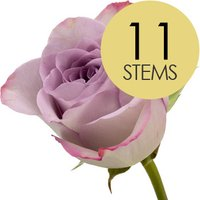 11 Lilac Roses