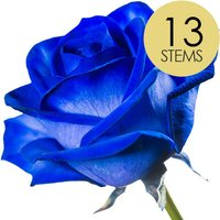 13 Blue (Dyed) Roses