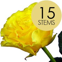 15 Yellow Roses