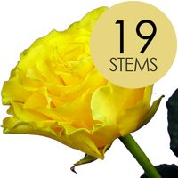19 Yellow Roses