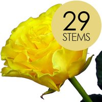 29 Yellow Roses