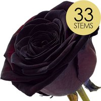 33 Black (Dyed) Roses