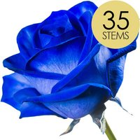 35 Blue Roses