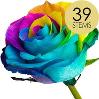 39 Happy Rainbow Roses