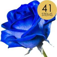 41 Blue Roses