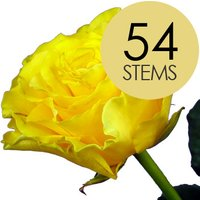 54 Yellow Roses