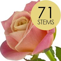 71 Peach Roses