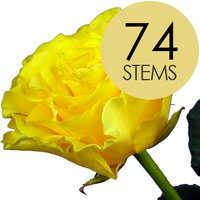 74 Yellow Roses