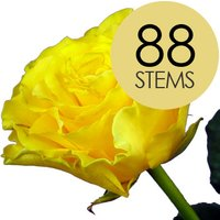 88 Yellow Roses