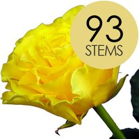 93 Yellow Roses