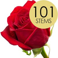 101 Bright Red Freedom Roses