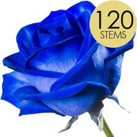 120 Wholesale Blue (Dyed) Roses