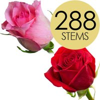 288 Wholesale Red and Pink Roses