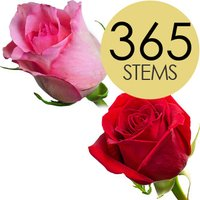 365 Wholesale Red and Pink Roses