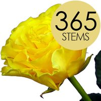 365 Wholesale Yellow Roses