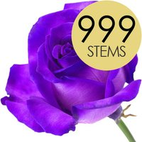 999 Wholesale Purple Roses