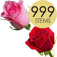 999 Wholesale Red and Pink Roses